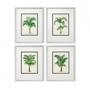 Prints Palms set of 4