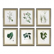 Prints Botanica set of 6